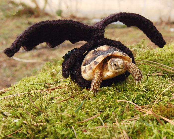cute-crochet-tortoise-cozy-katie-bradley-17