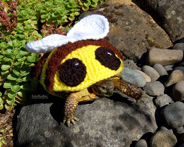 cute-crochet-tortoise-cozy-katie-bradley-21