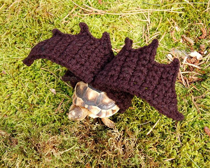 cute-crochet-tortoise-cozy-katie-bradley-22