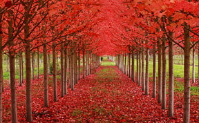 Code Red: Post Best Photos Where Red Color Dominates