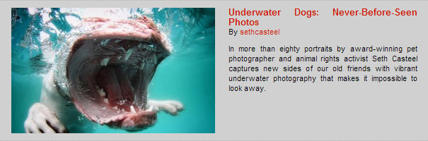 Underwater Dogs: Never-Before-Seen Photos