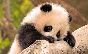 Funcage cute baby animal