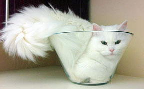 http://www.boredpanda.com/blog/wp-content/uploads/2013/07/funny-liquid-cats-latest.jpg