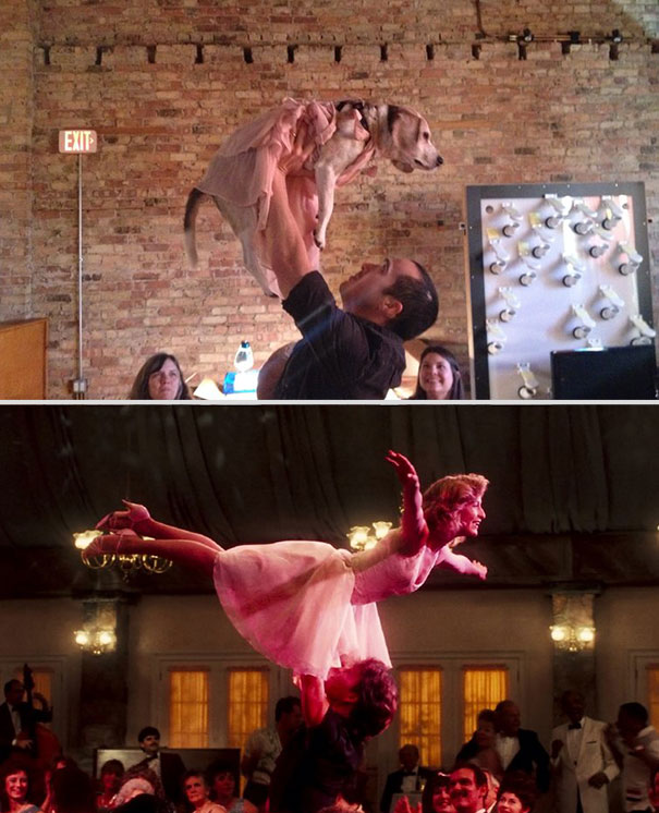 wrigley-at-the-movies-dog-reenacts-famous-movies-1
