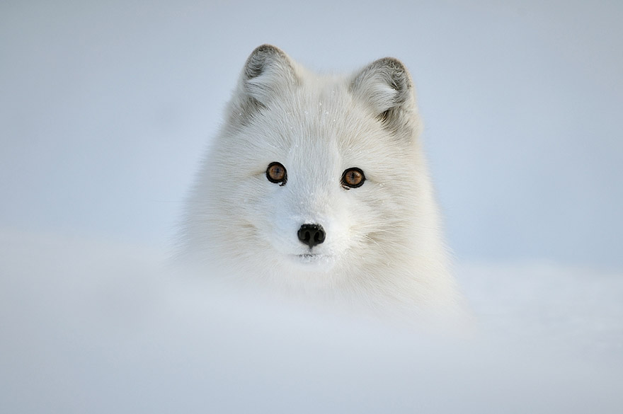 animals-in-winter-12