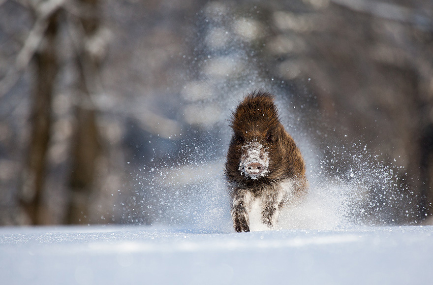 animals-in-winter-16-2
