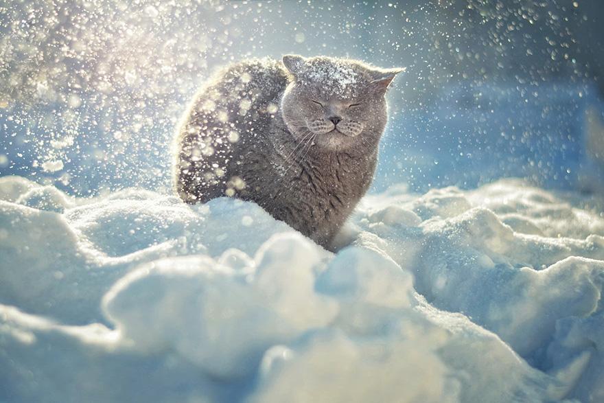 animals-in-winter-18