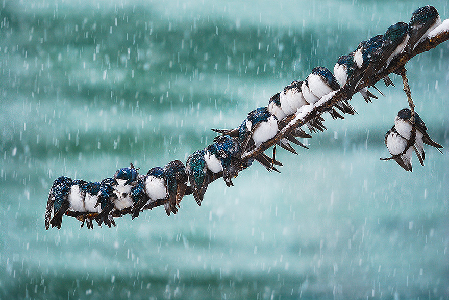 animals-in-winter-3