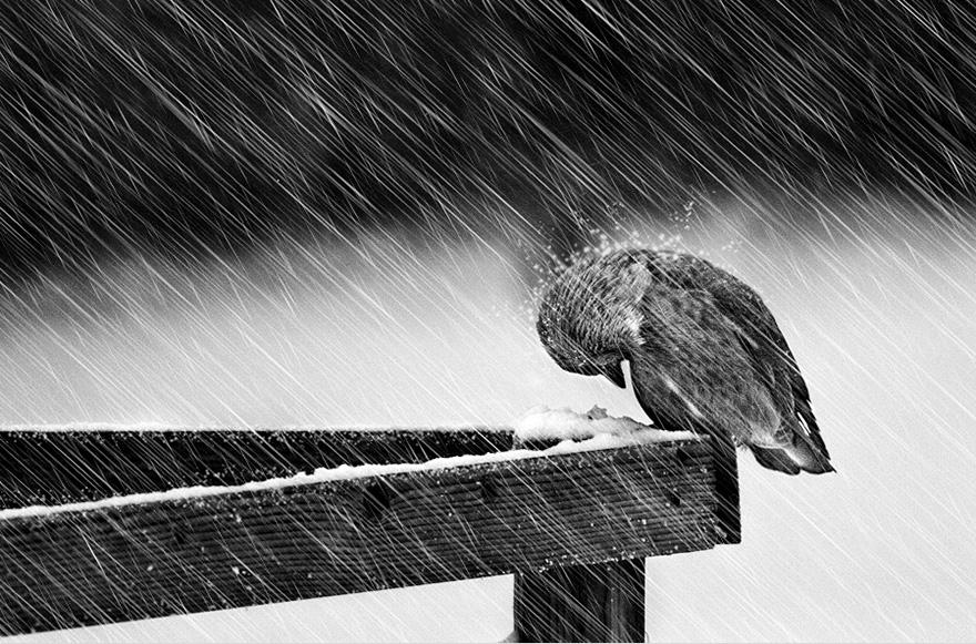 animals-in-winter-7
