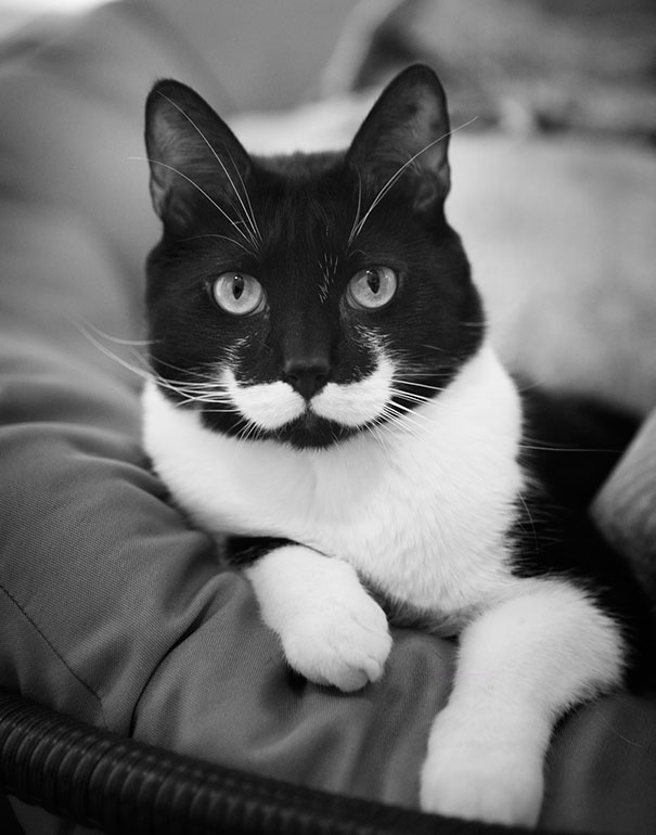 animals-with-mustache-2
