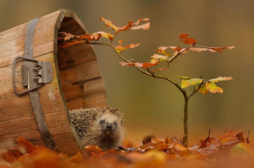 cute-animal-photography-edwin-kats-1