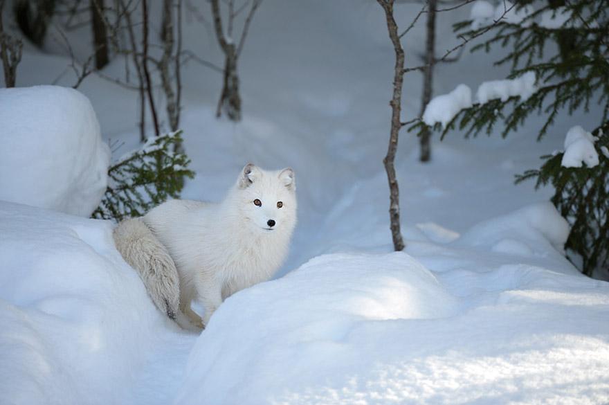cute-animal-photography-edwin-kats-12