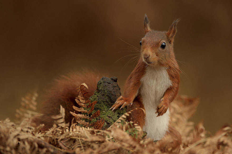 cute-animal-photography-edwin-kats-15