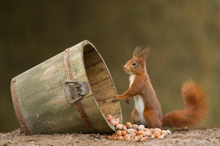 cute-animal-photography-edwin-kats-4
