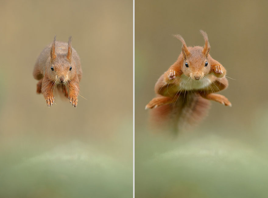 cute-animal-photography-edwin-kats-5