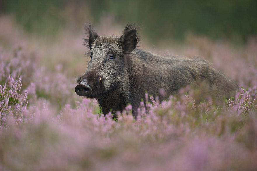 cute-animal-photography-edwin-kats-8