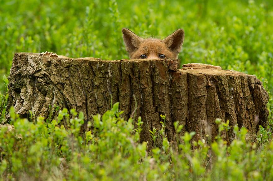 cute-animal-photography-edwin-kats-9