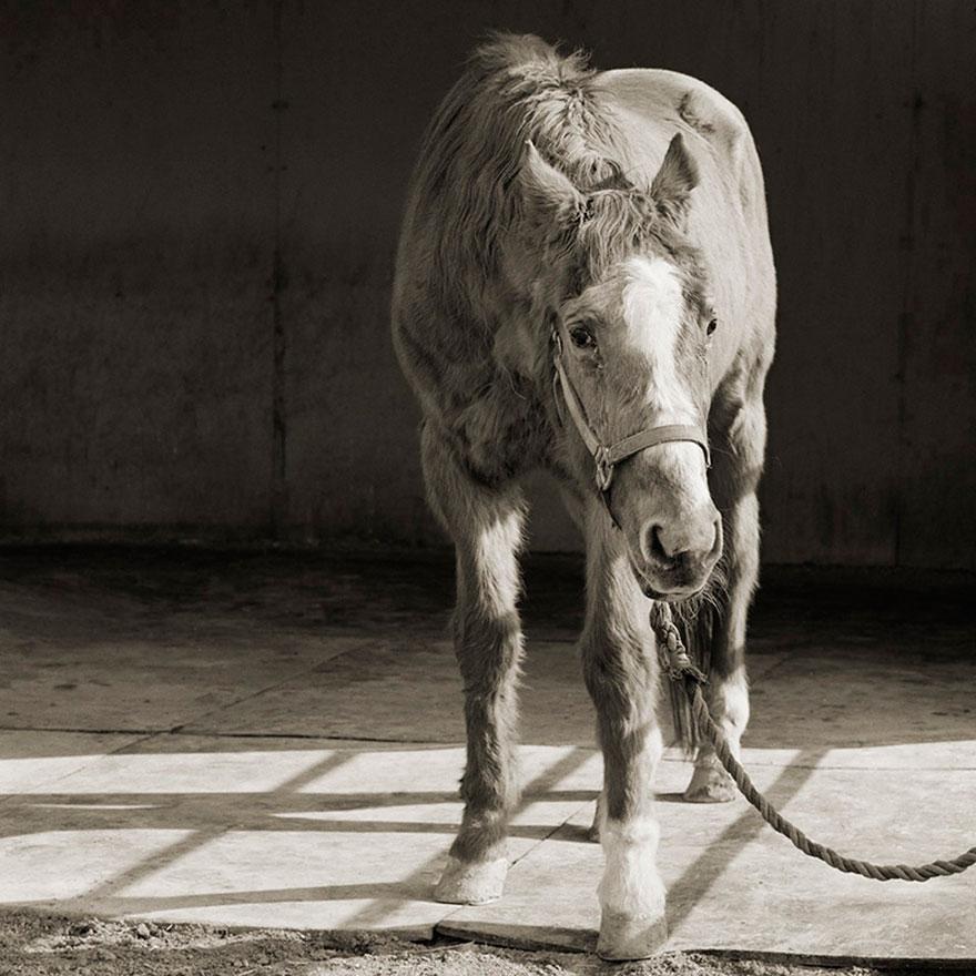 elderly-animals-isa-leshko-1
