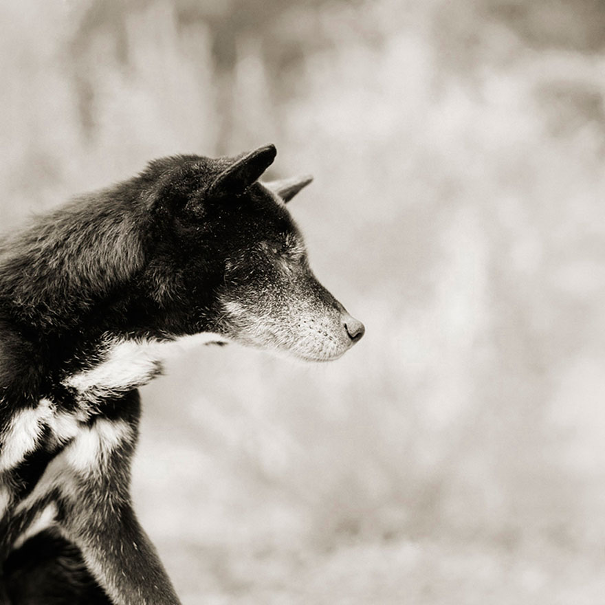 elderly-animals-isa-leshko-13