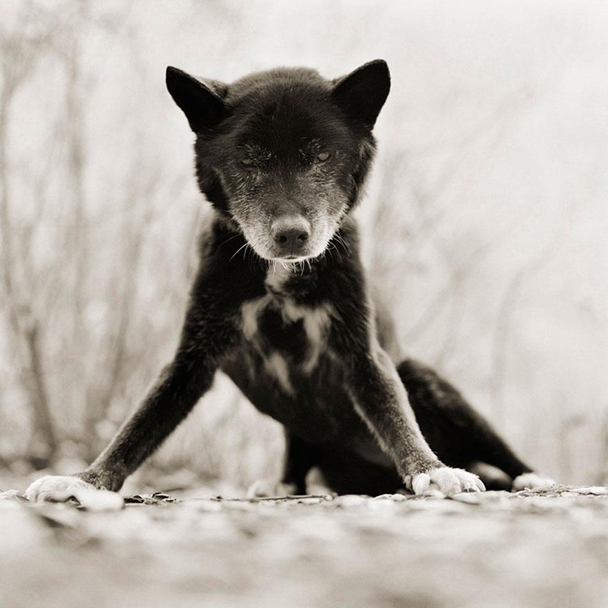 elderly-animals-isa-leshko-3