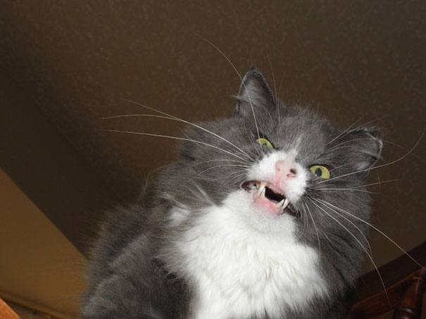 funny-cats-sneezing-1