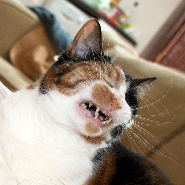funny-cats-sneezing-22