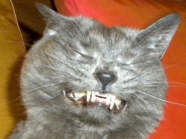 funny-cats-sneezing-7
