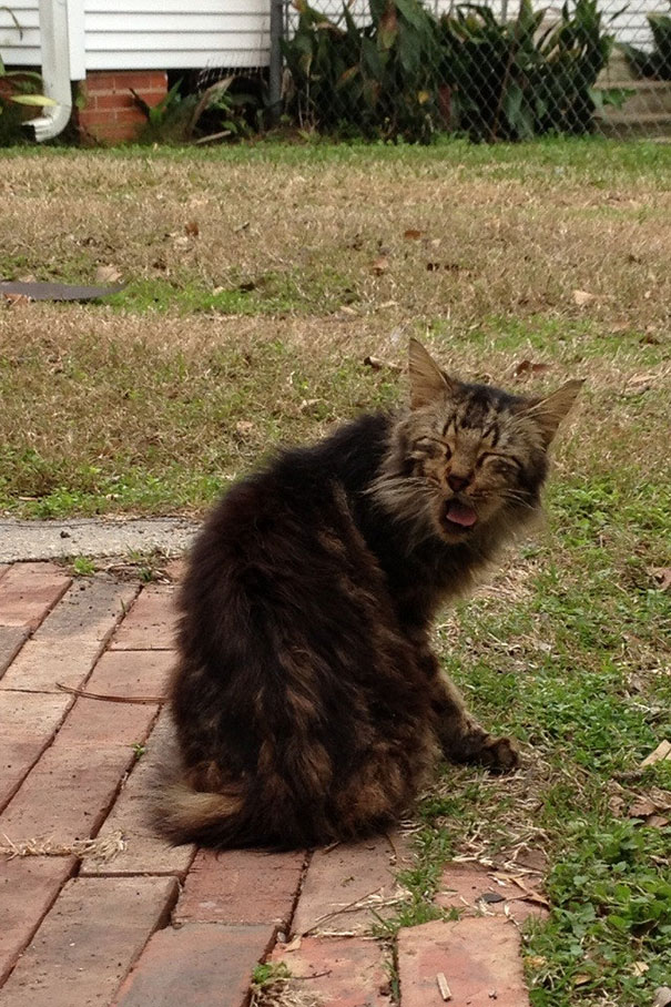 funny-cats-sneezing-9