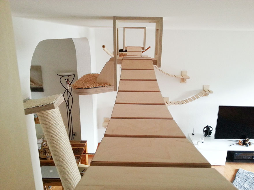 overhead-cat-playground-room-goldtatze-2