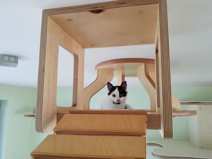 overhead-cat-playground-room-goldtatze-5