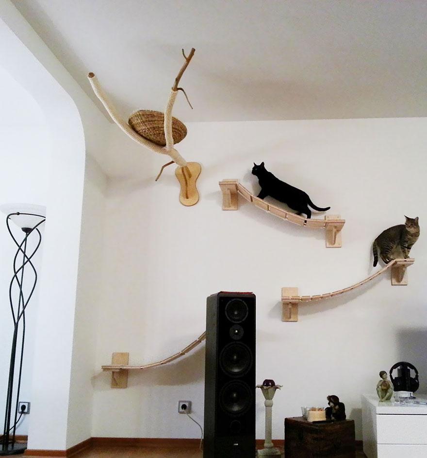 overhead-cat-playground-room-goldtatze-6