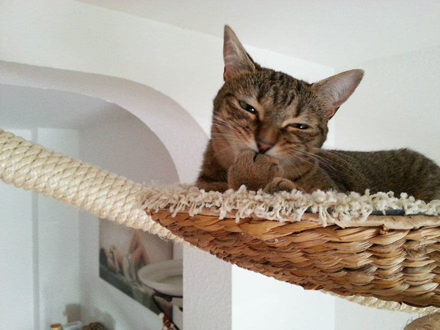 overhead-cat-playground-room-goldtatze-7