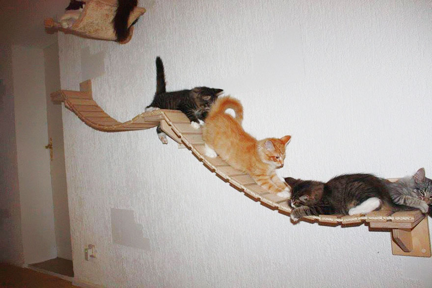 overhead-cat-playground-room-goldtatze-8