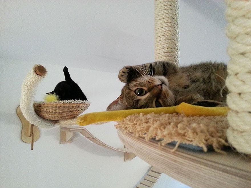 overhead-cat-playground-room-goldtatze-9