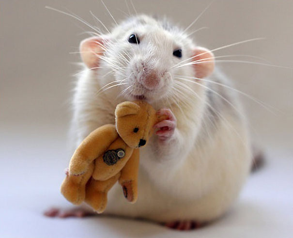 rats-with-teddy-bears-ellen-van-deelen-5