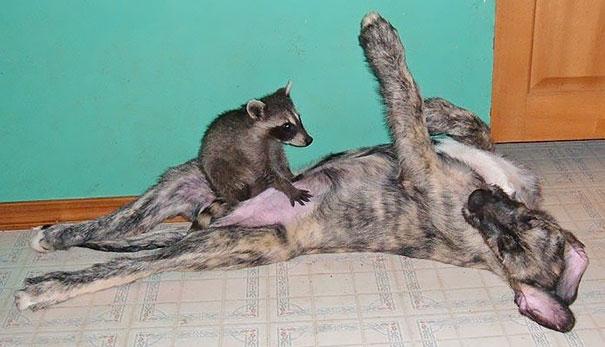 animal-friendship-at-rocky-ridge-refuge-10