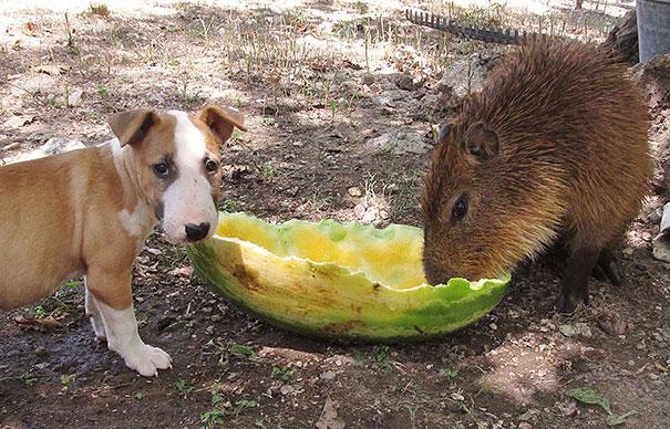 animal-friendship-at-rocky-ridge-refuge-14