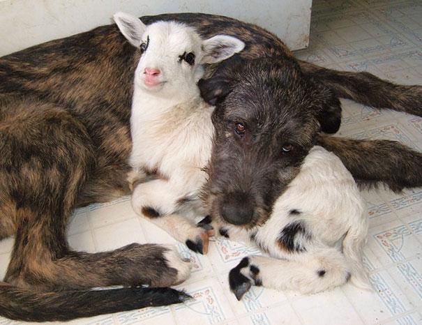 animal-friendship-at-rocky-ridge-refuge-32