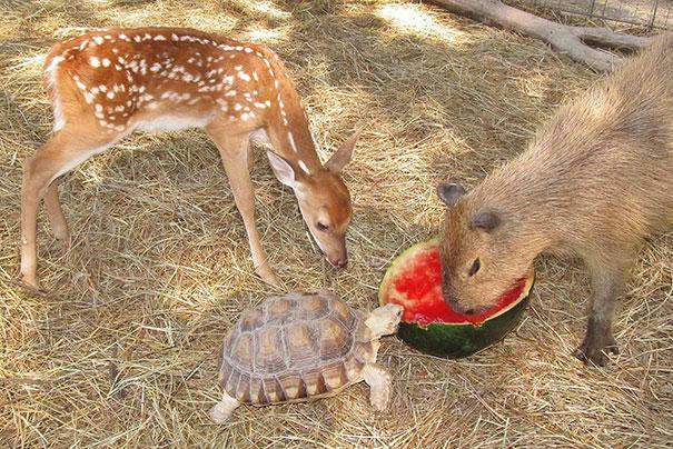animal-friendship-at-rocky-ridge-refuge-7