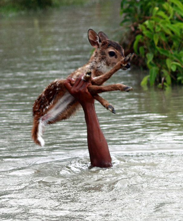 bangladeshi-boy-salva de ahogarse-baby-venado-1