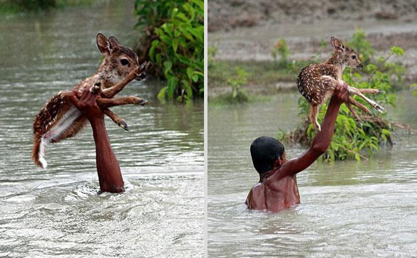 bangladeshi-boy-salva de ahogarse-baby-venado-5