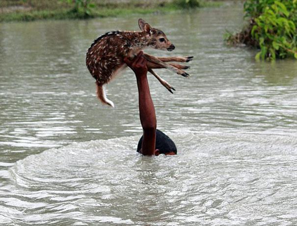 bangladeshi-boy-saves-drowning-baby-deer-6