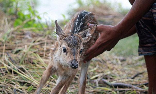 bangladeshi-boy-salva de ahogarse-baby-venado-9