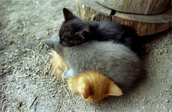 cute-animals-sleeping-pillows-19