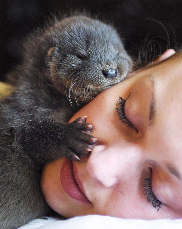cute-animals-sleeping-pillows-32