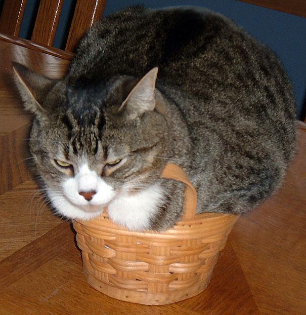 funny-cats-if-it-fits-i-sits-18