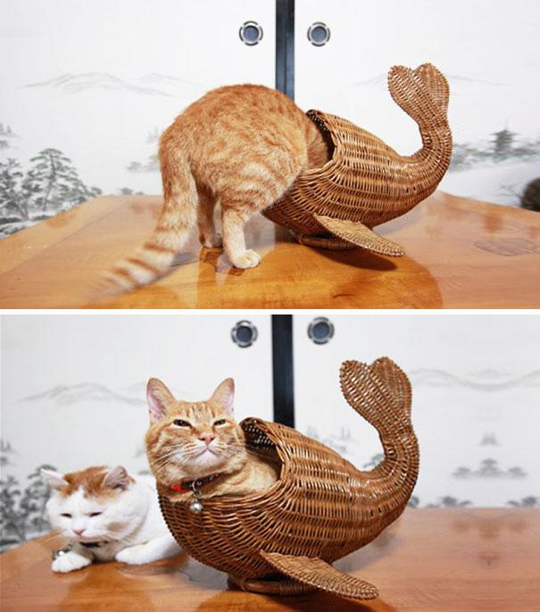 funny-cats-if-it-fits-i-sits-20