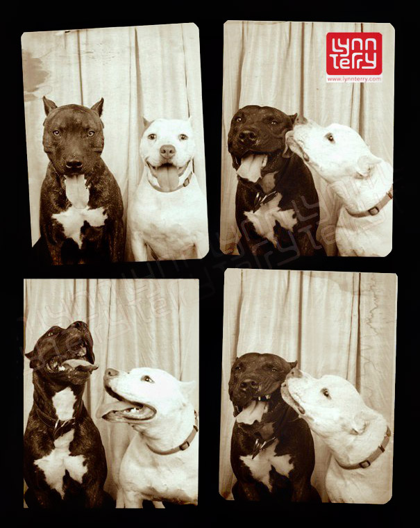 pit-bull-photo-booth-love-2