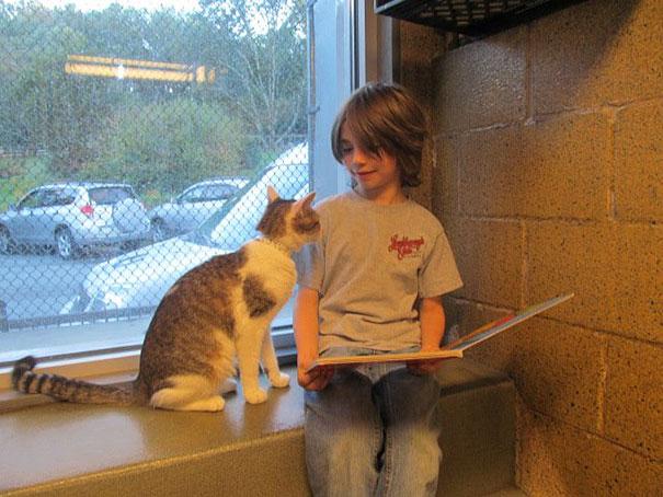 reading-children-shelter-cats-book-buddies-6