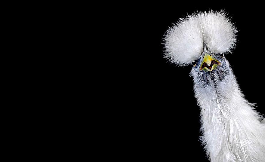 ayam-seramas-chicken-photography-ernest-goh-4